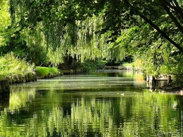 Les Hortillonnages d'Amiens en barque