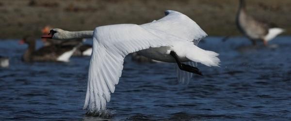 Le monde extraordinaire des oiseaux du Parc du Marquenterre