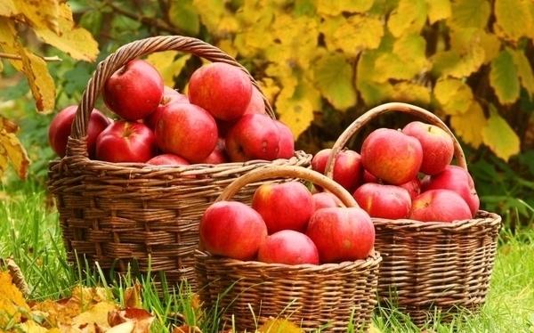 Ecomusée de la pomme et du cidre