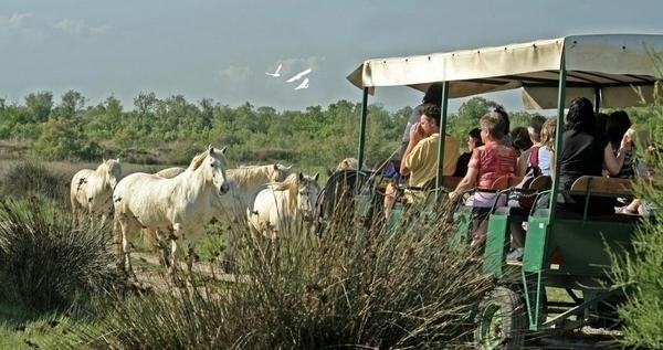 Les Marais du Vigueirat en calèche