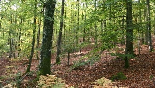 Forêt domaniale d'Ecouves