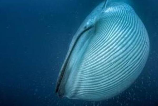 Cétacés, seigneurs des océans