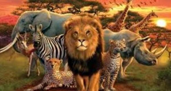 Un monde d'animaux