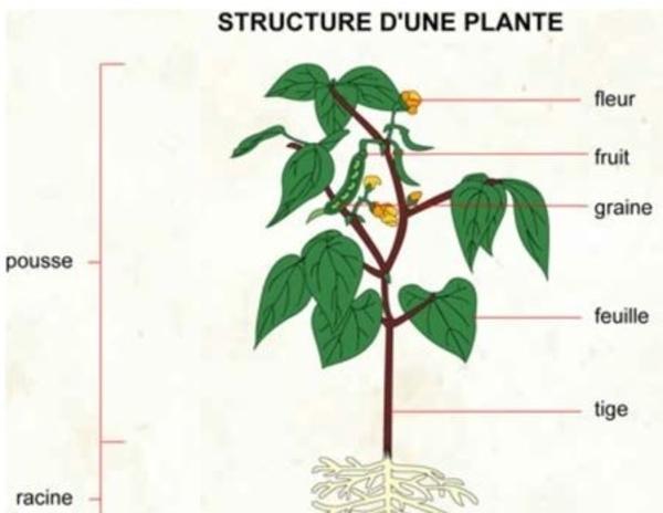 Qu'est-ce qu'une plante ?
