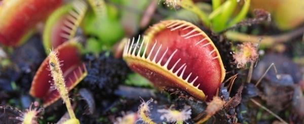Atelier de jardinage pour cultiver les plantes carnivores