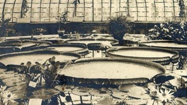 Histoire du Jardin botanique