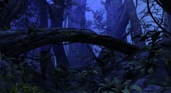 Visite nocturne en forêt tropicale