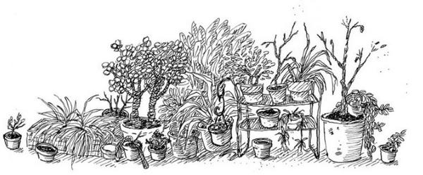 Plantes étranges et mystiques