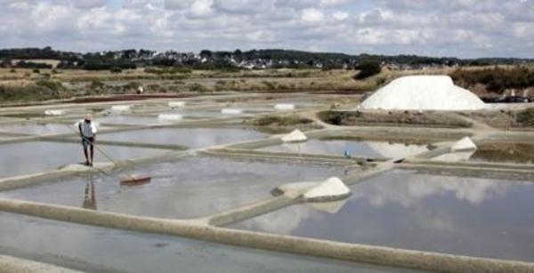 Terre de sel - Sel et nature