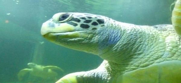Aquarium de Vannes, atelier scientifique