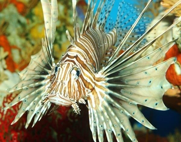 Aquarium de Vannes, nourrissages