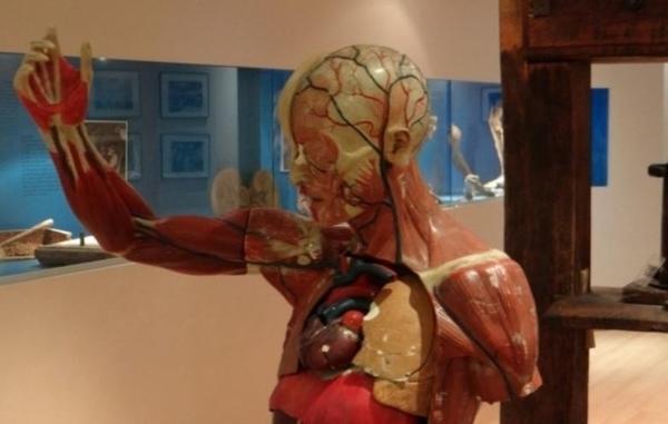 Musée de l'Ecorché d'Anatomie