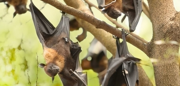 Ces étranges animaux qui peuplent les arbres