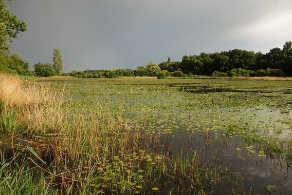 Les sites protégés des étangs de la Touche et Purais