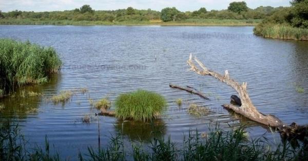 Découverte de la Réserve Naturelle Régionale Terres et étangs de Brenne Massé – Foucault