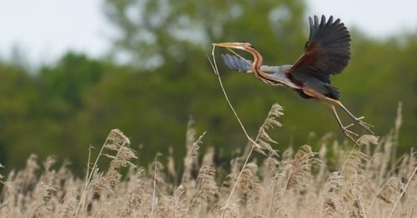 Les oiseaux de la réserve