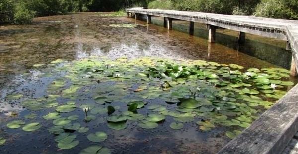 Balade contée aux abords de l'étang Cistude (famille)