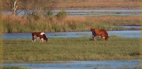 Réserve naturelle nationale de l'étang de Cousseau