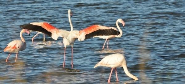 Observation des oiseaux au Salin des Pesquiers