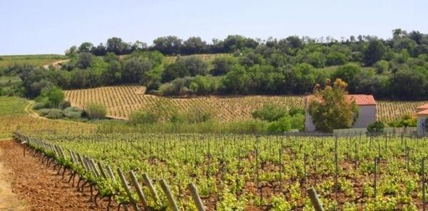 Vignobles Dom Brial de Baixas