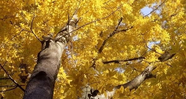 L'Arboretum National des Arbres