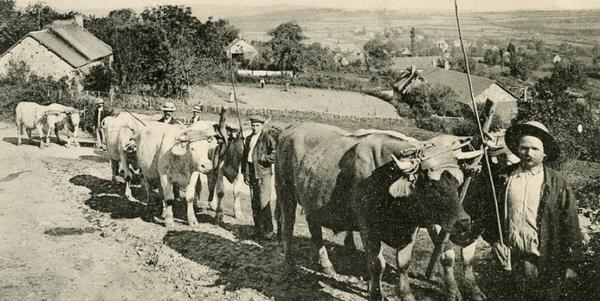 Découverte de la ferme des Buttons en chariot