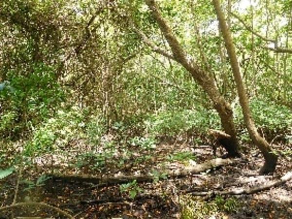 La mangrove en kayak et sous toutes ses coutures