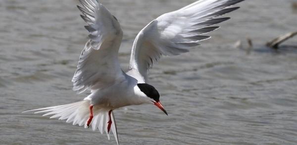 A la rencontre des oiseaux de Loire en bateau au Bec d'Allier