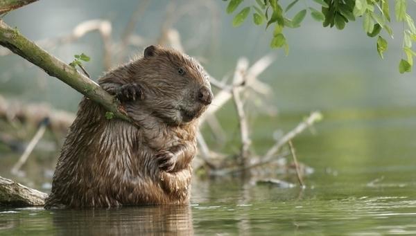 A la rencontre des castors en bateau de Loire