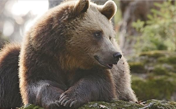 Parc animalier des Pyrénées - Soigneur d'un jour