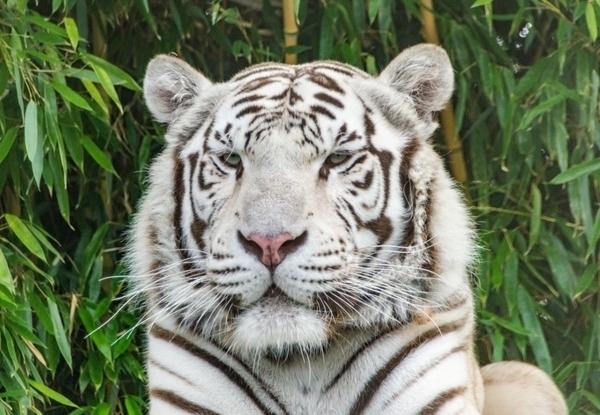 Zoo d'Asson - Soigneur d'un jour