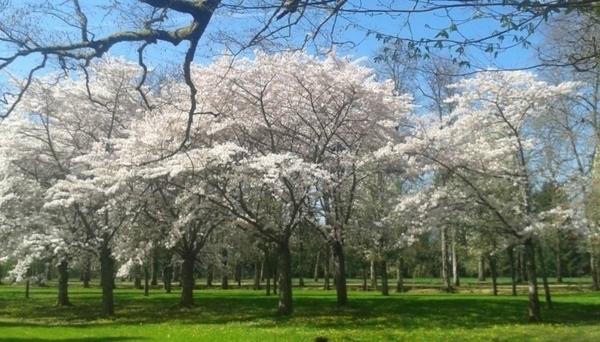 Arboretum Adeline