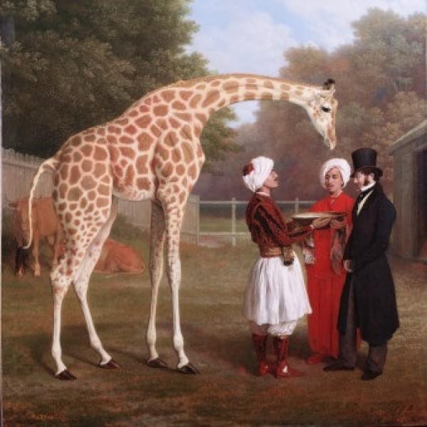 Clara le rhinocéros et Zarafa la girafe
