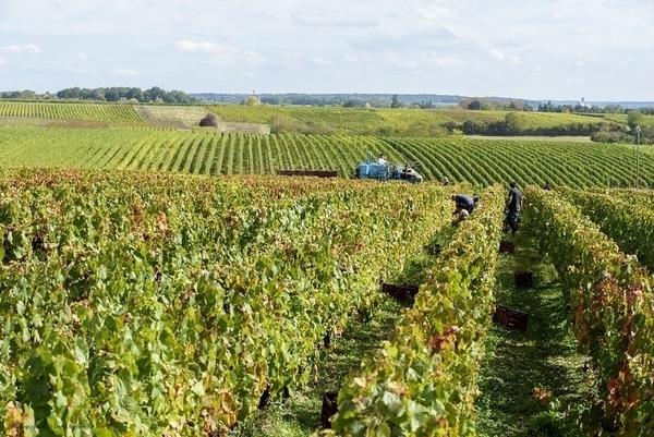 Flânerie au Domaine avec le vigneron