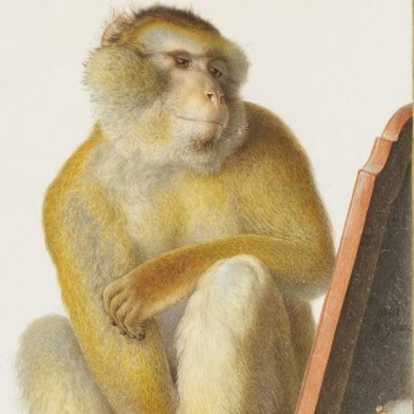 Le singe, un autre nous-même ?